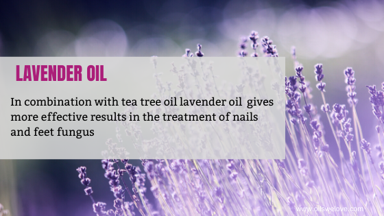 lavender essential oil For Nail Fungus